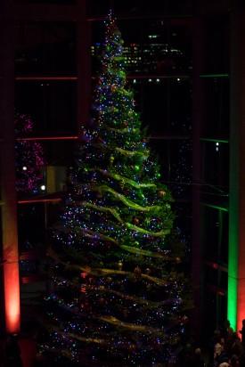 NGC Tree Main